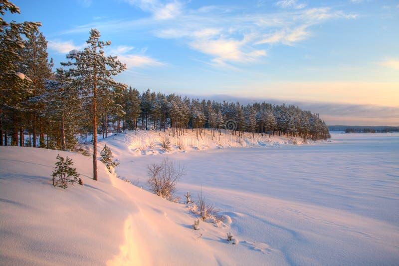 Orario invernale nel lago della foresta fotografia stock libera da diritti