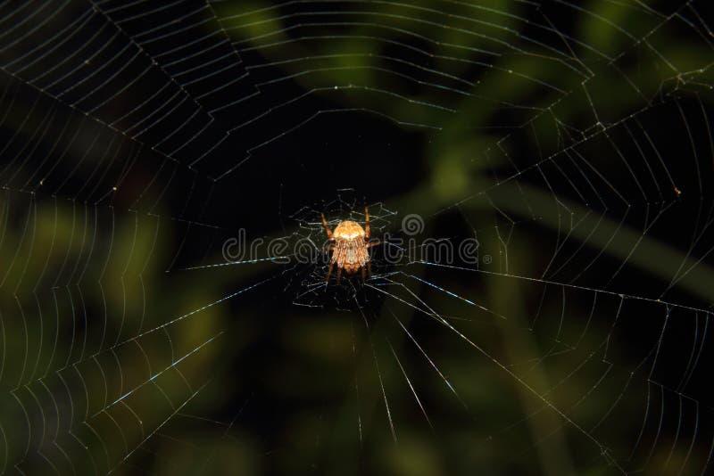 Orb Weaver Spider royaltyfri fotografi