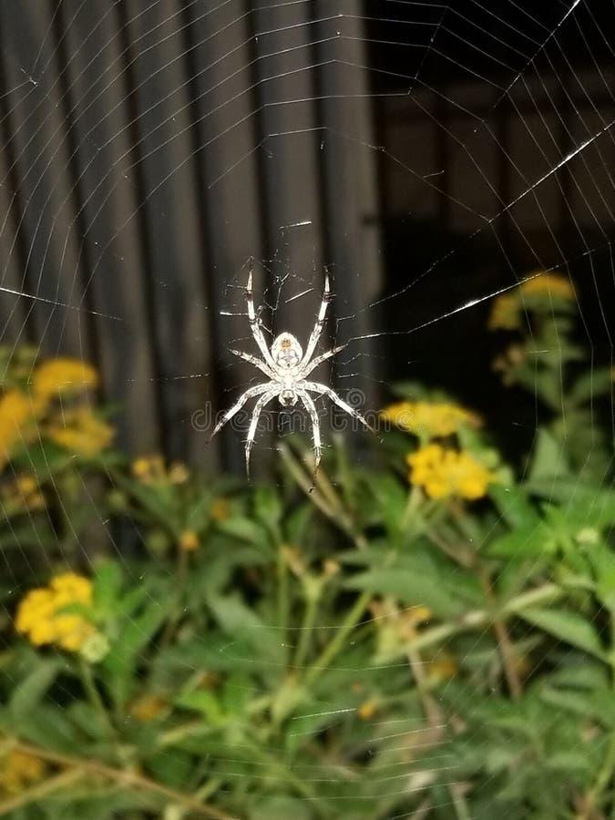 Orb Weaver Web - Het mooie Web Spinning royalty-vrije stock foto's