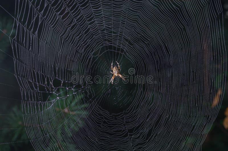 Orb-wevende spinzitting in centrum van zijn Web royalty-vrije stock afbeelding