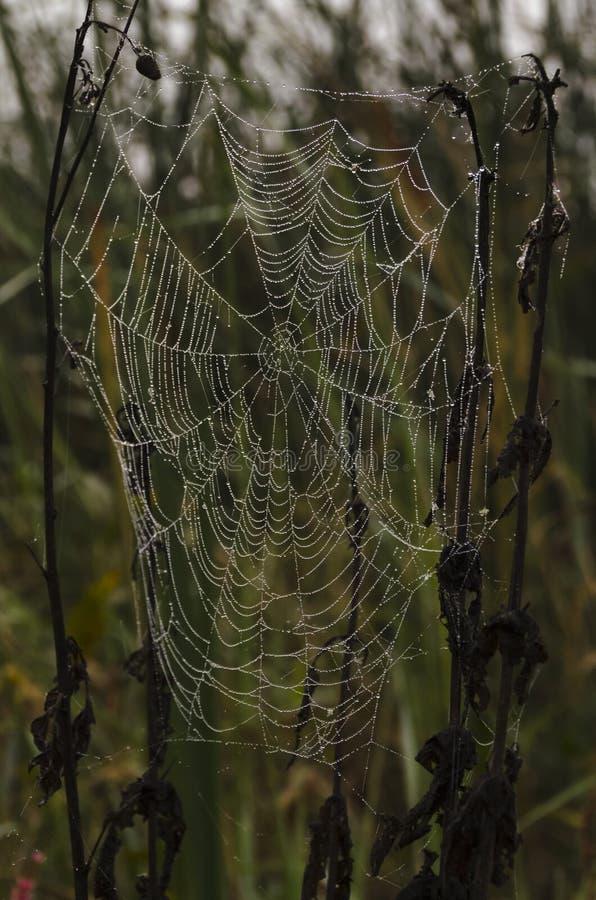 Orbe Spiderweb en el rocío de la mañana imágenes de archivo libres de regalías