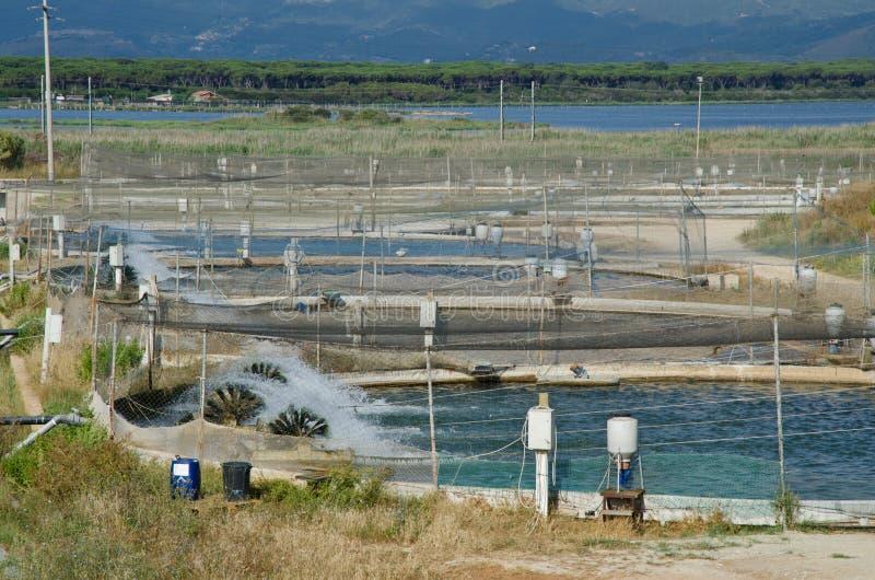Orbetello toscano, acuicultura fotos de archivo libres de regalías