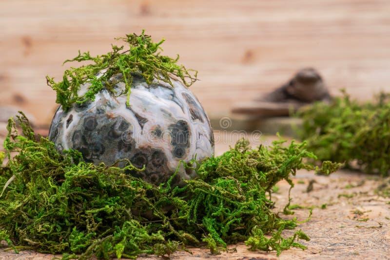 Orbicular oceaanjaspisgebied met gekristalliseerd vugs van Madagascar op mos, bryophyta en cork stock afbeeldingen