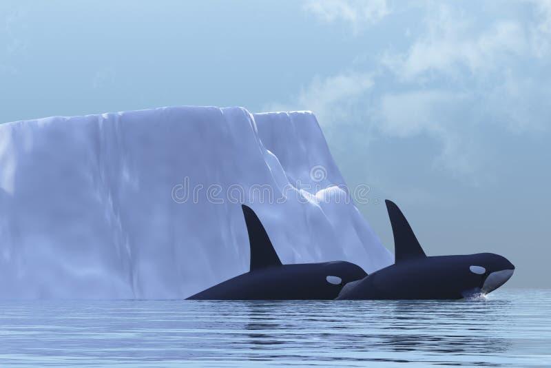 Orca stock de ilustración