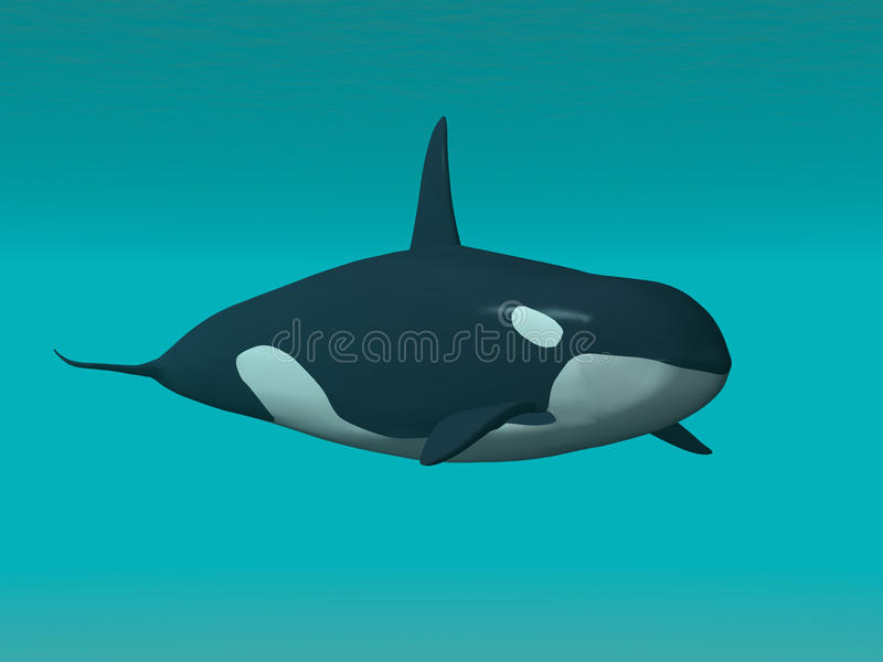 Download Orca stock illustration. Illustration of ocean, marine - 20750361