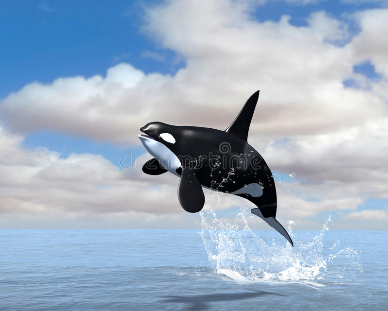 Orca Killer Whale Breach Illustration. Illustration of an orca killer whale breaching. The marine animal flies through the air during the breach and lives in the royalty free illustration
