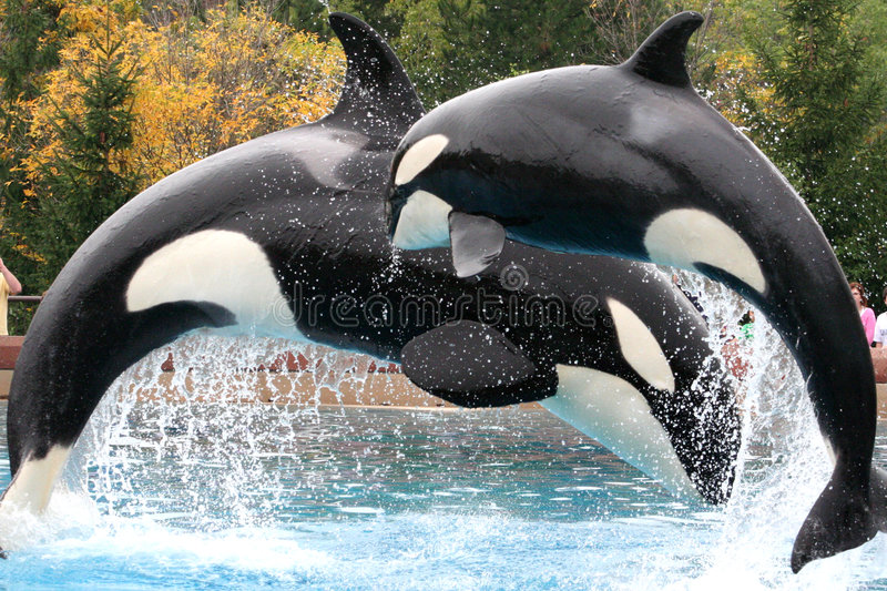 orca s στοκ φωτογραφία
