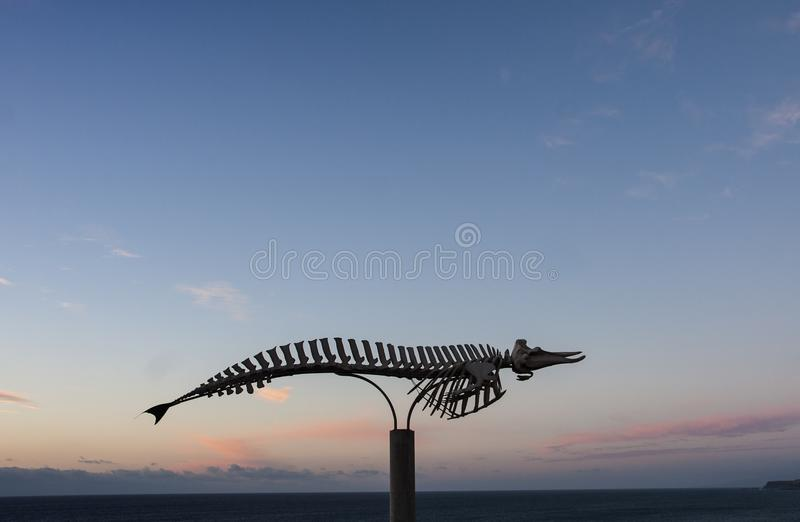 Orca`s skeleton stock image