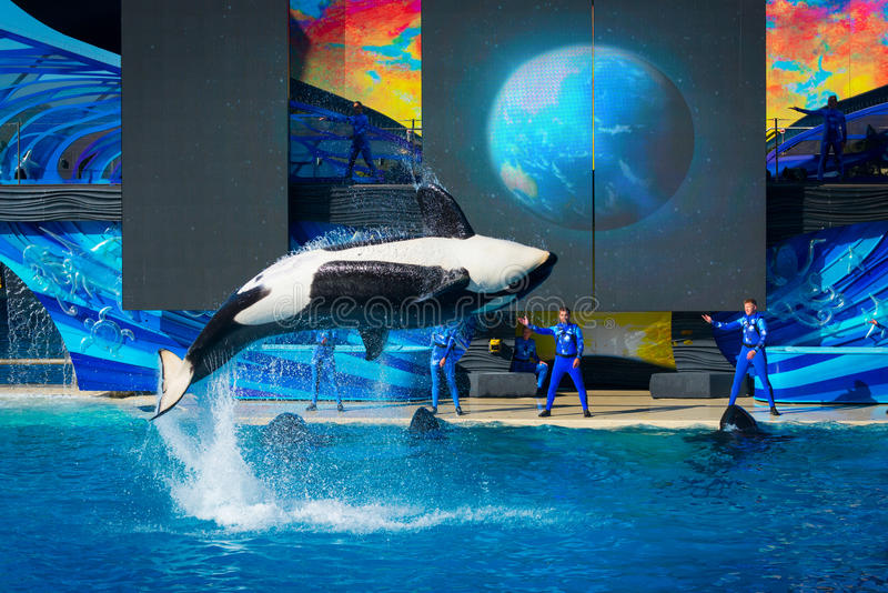 Download Orca Spin Bow - SeaWorld San Diego Editorial Image - Image of seaworld, captivity: 73532365