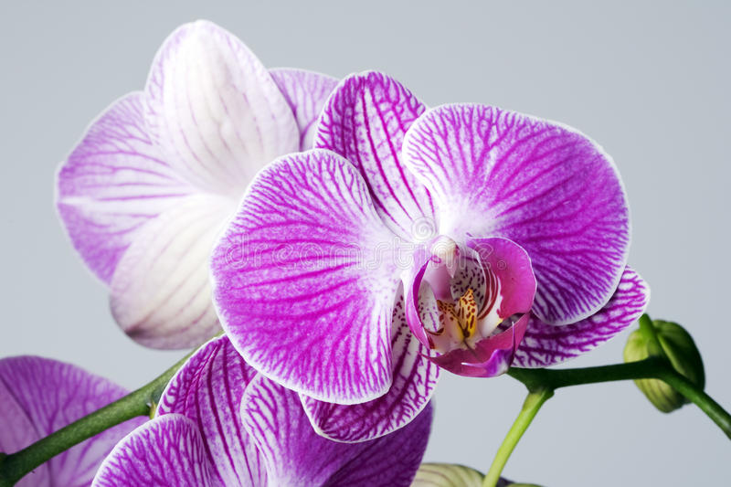 Download Orchard stock image. Image of beauty, purple, orchard - 11406771