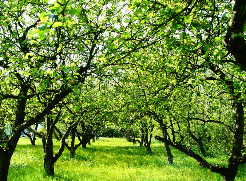 orchard stock image