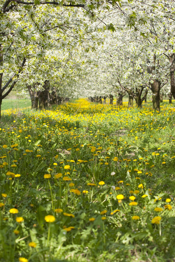 Free Orchard. Stock Photo - 32355720