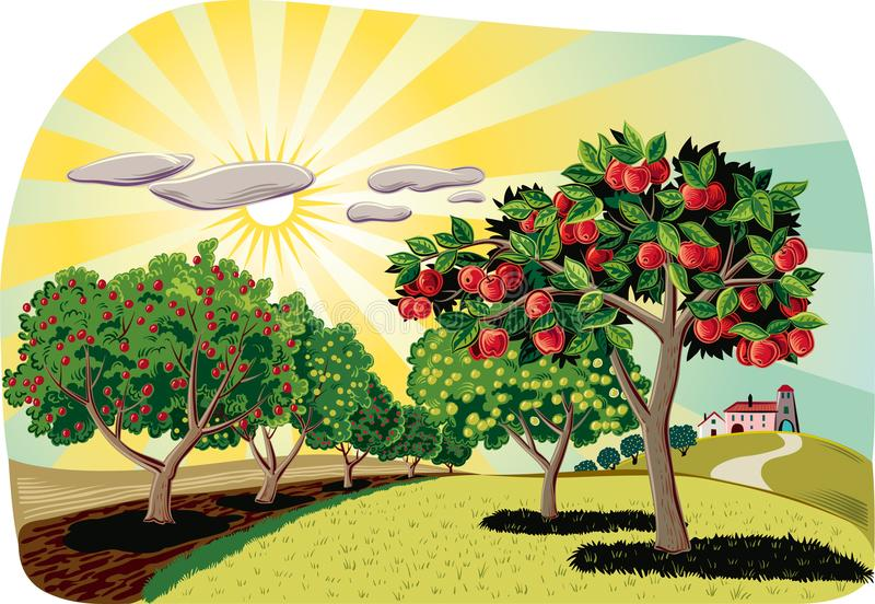 Orchard with apple trees. Apple trees in an orchard, With an agricultural landscape in the background royalty free illustration