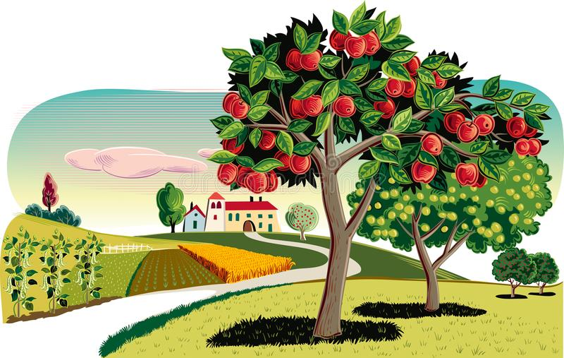 Orchard with apple trees. Apple trees in an orchard, With an agricultural landscape in the background vector illustration