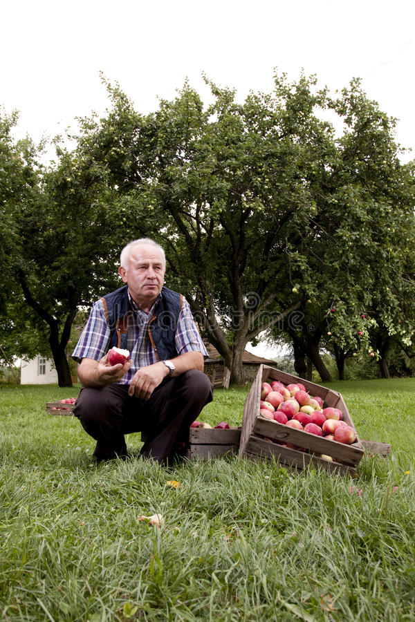 Download Orchard stock photo. Image of garden, agriculture, ripe - 34304860