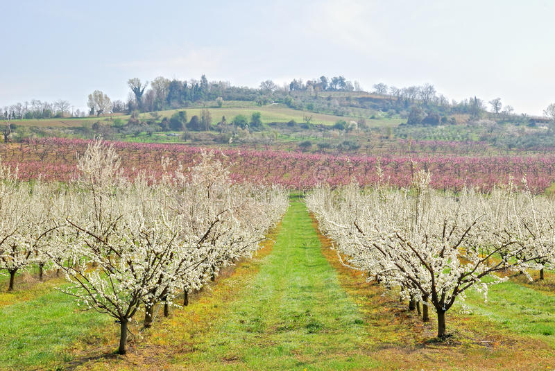 Orchard in countryside in march