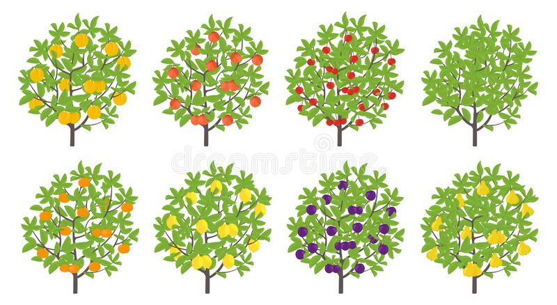 Orchard fruit tree set. Pear and mandarin nectarine apple plum lemon cherry. Vector illustration. Flat vector color Illustration. Clipart. Ripe edible fruit on royalty free illustration