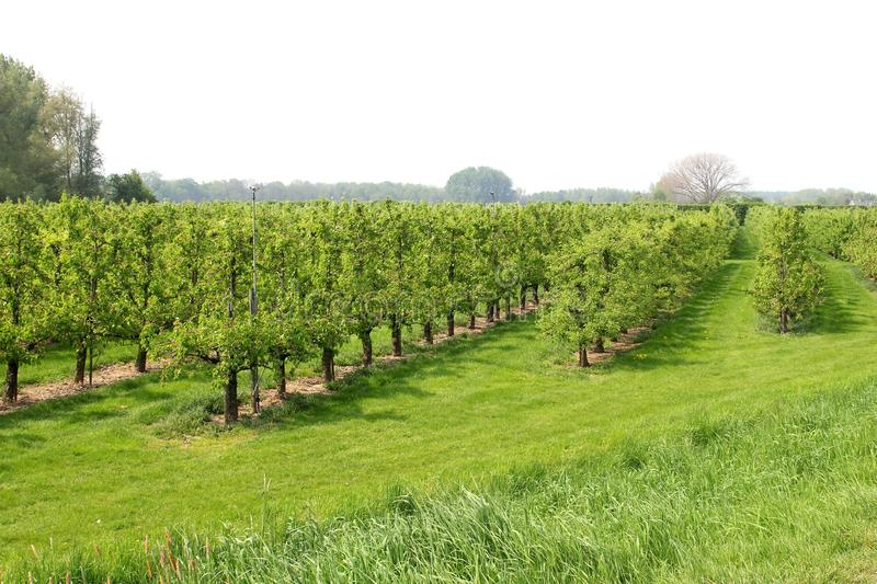 Picturesque orchard with fruit-growing industries, Tricht, Betuwe,Netherlands royalty free stock photos
