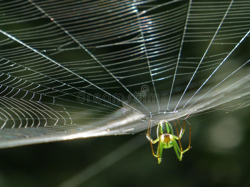 Orchard Orbweaver Spider on the web. Photo taken in Taiwan stock photos