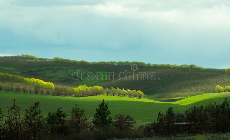 Rolling hills with orchard stock images
