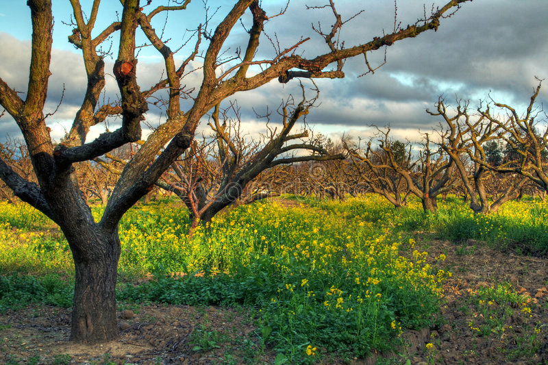Download Orchard In Spring Stock Images - Image: 2078864