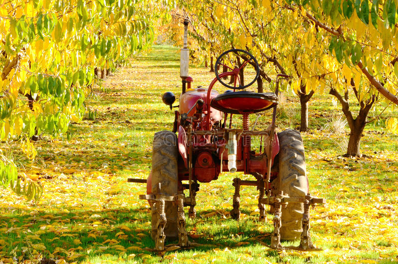 Download Orchard Tractor Royalty Free Stock Images - Image: 21884019