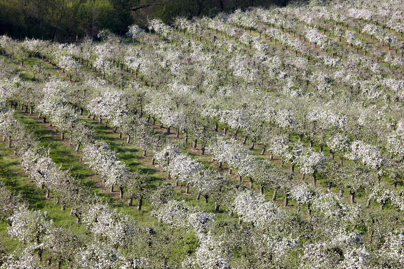 Orchards stock photo