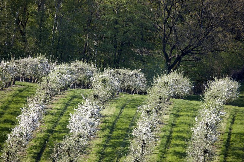 Orchards Stock Photography