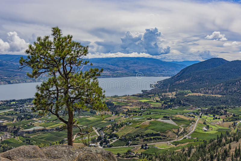 Orchards and Okanagan Lake from Giants Head Mountain near Summerland British Columbia Canada. Witha Ponderosa Pine tree stock image