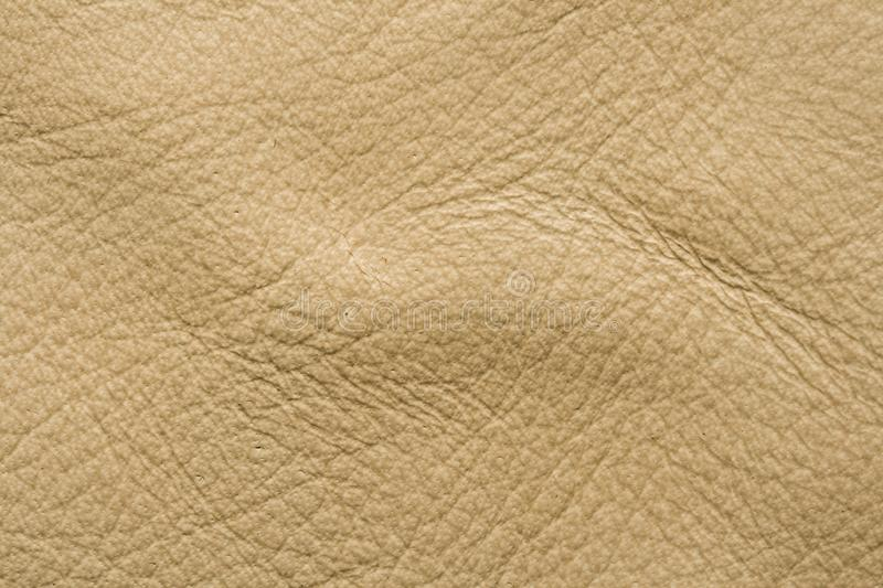 Orchi Leather Stock Image