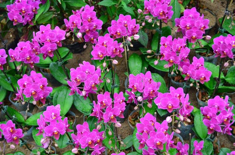 Orchidée 002 photo stock
