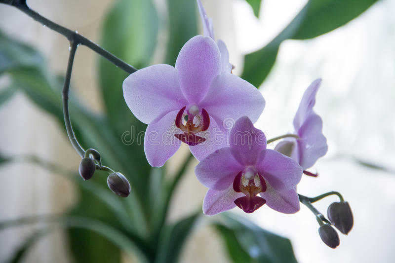 Orchidée photo stock