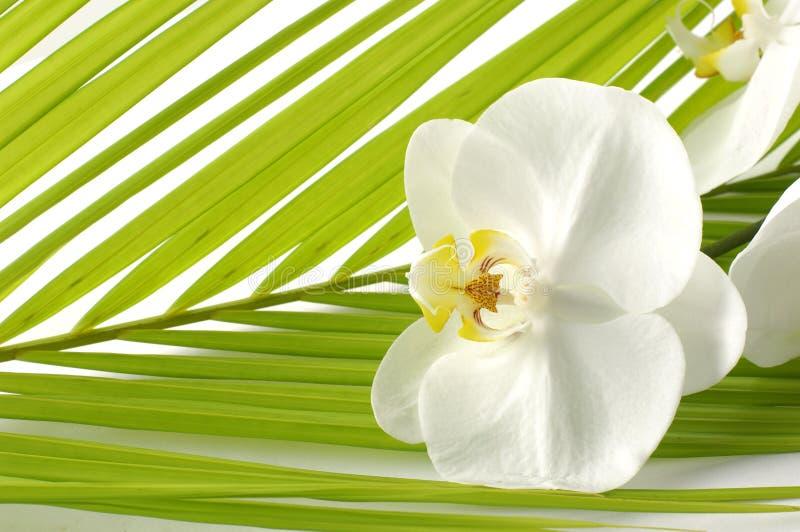 Download Orchidée photo stock. Image du centrale, coloré, objet - 8671588