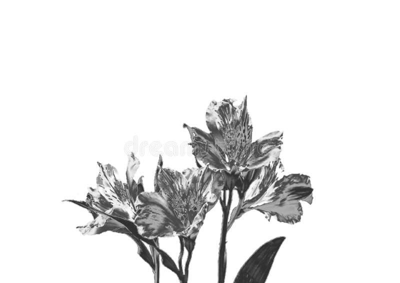 Orchidée argentée photos libres de droits