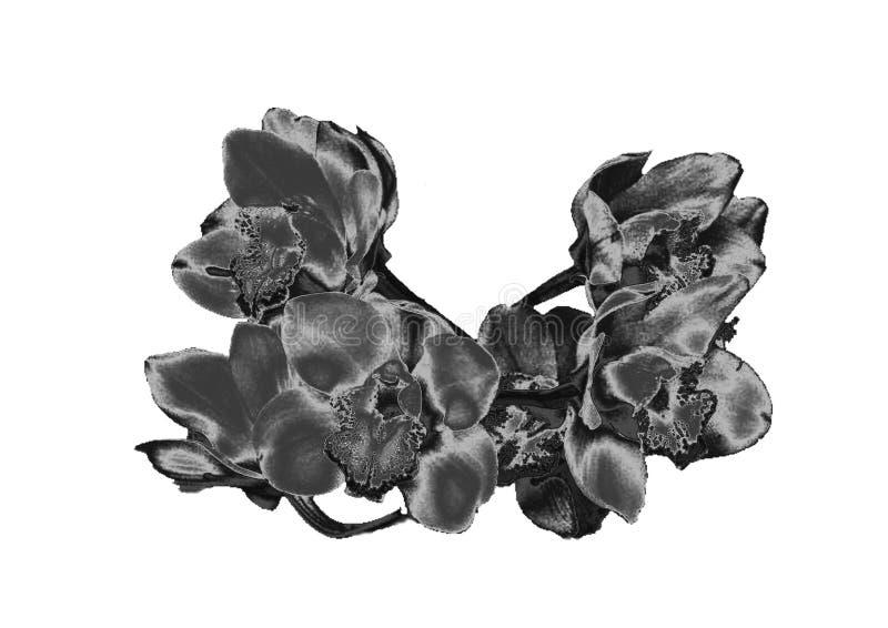 Orchidée argentée images stock