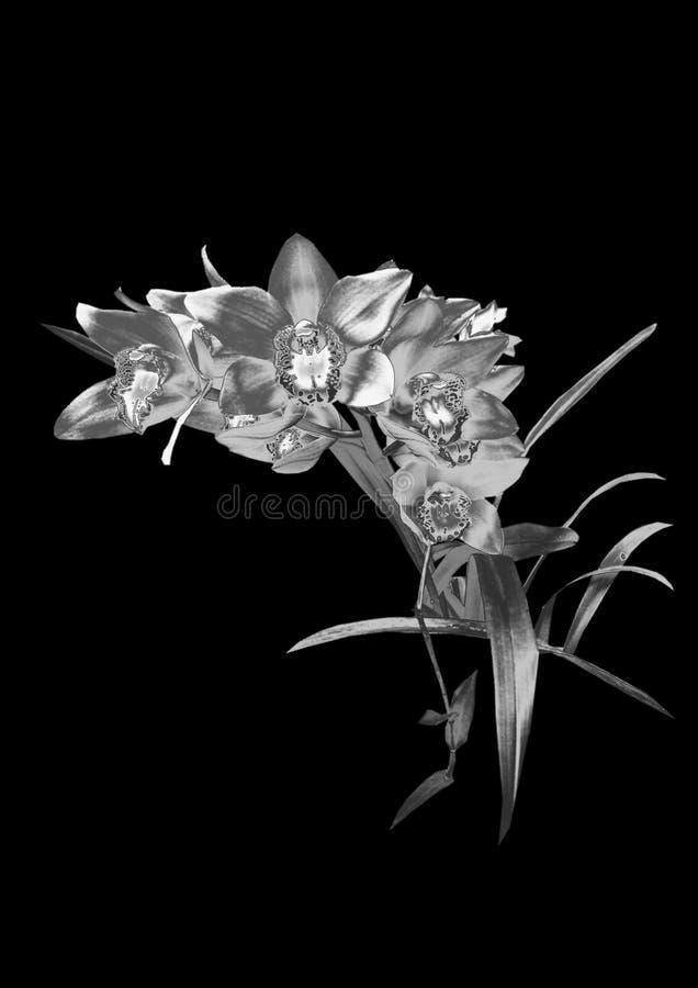 Orchidée argentée images libres de droits