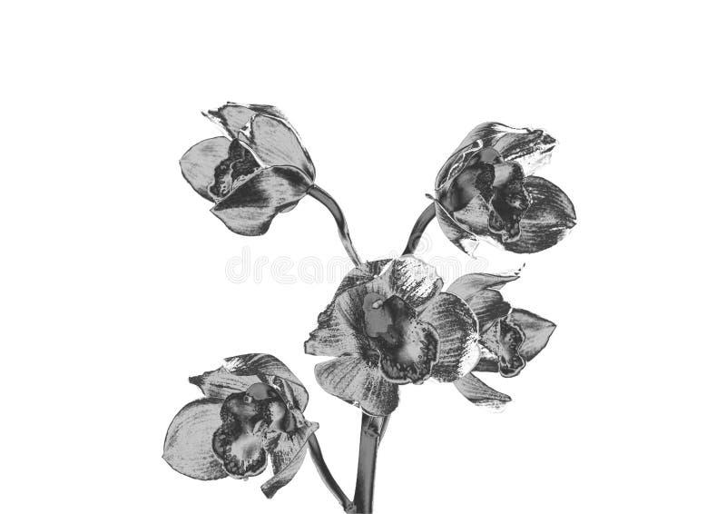 Orchidée argentée illustration de vecteur