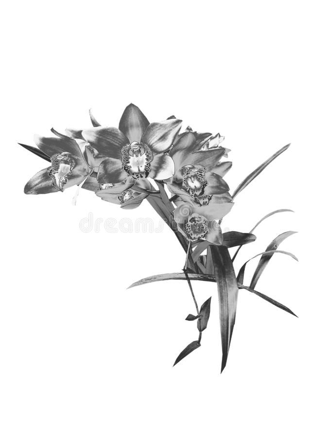 Orchidée argentée photographie stock libre de droits