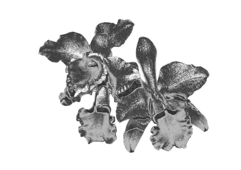 Orchidée argentée photo stock
