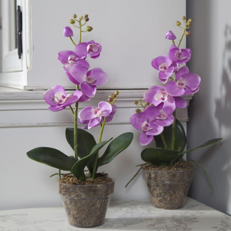 orchid e artificielle rose mise en pot sur la table noire image stock image du neuf sens. Black Bedroom Furniture Sets. Home Design Ideas