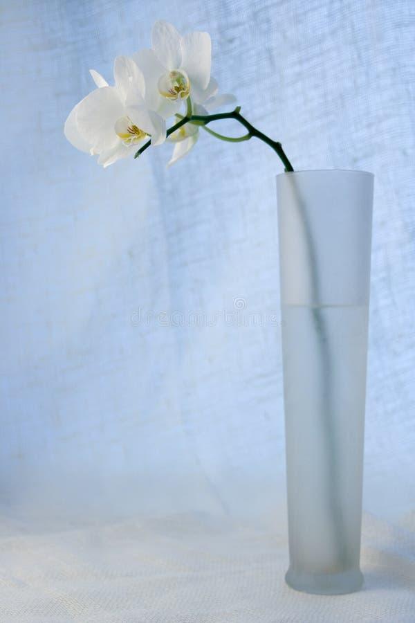 Orchidée blanche dans le vase images stock