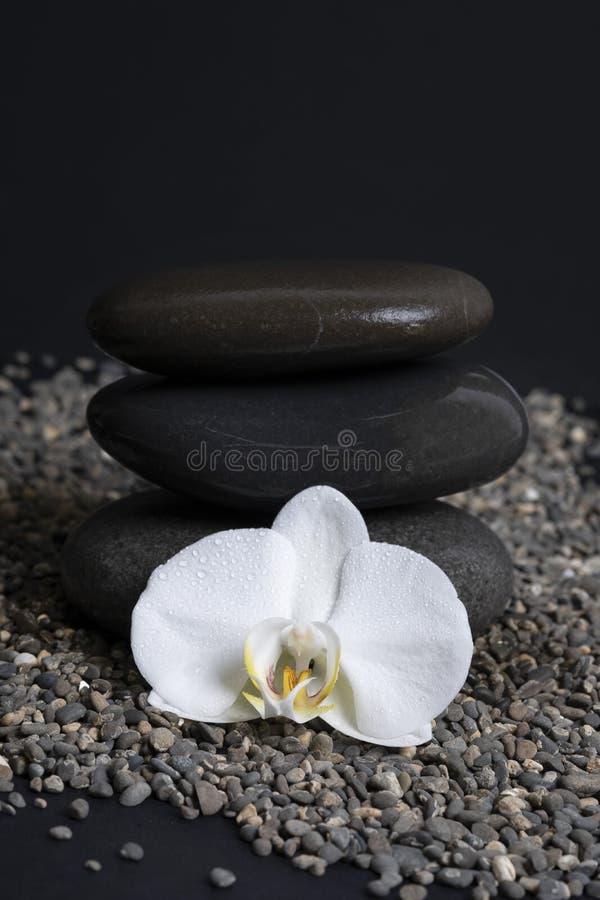 Orchidée blanche entourée par des pierres, photo dans une clé foncée photo stock