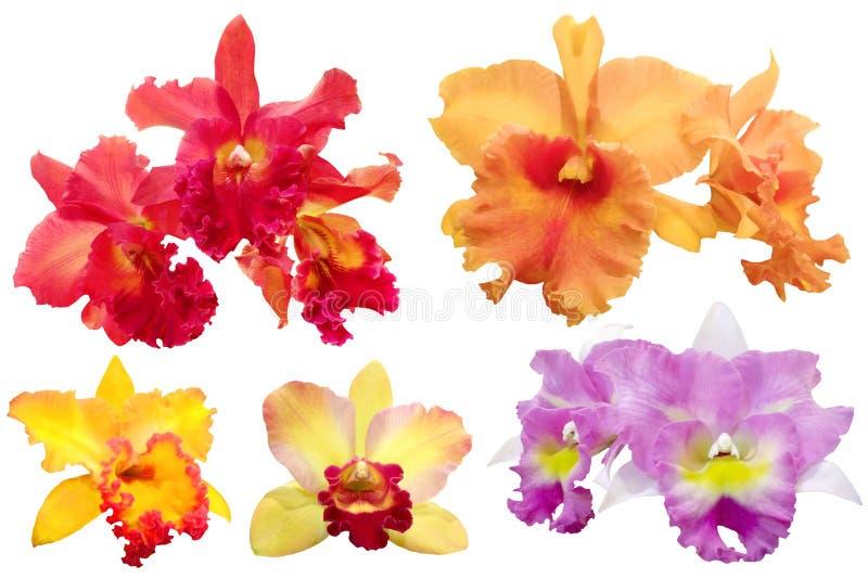 Orchidée colorée d'isolement avec des chemins de coupure photo stock