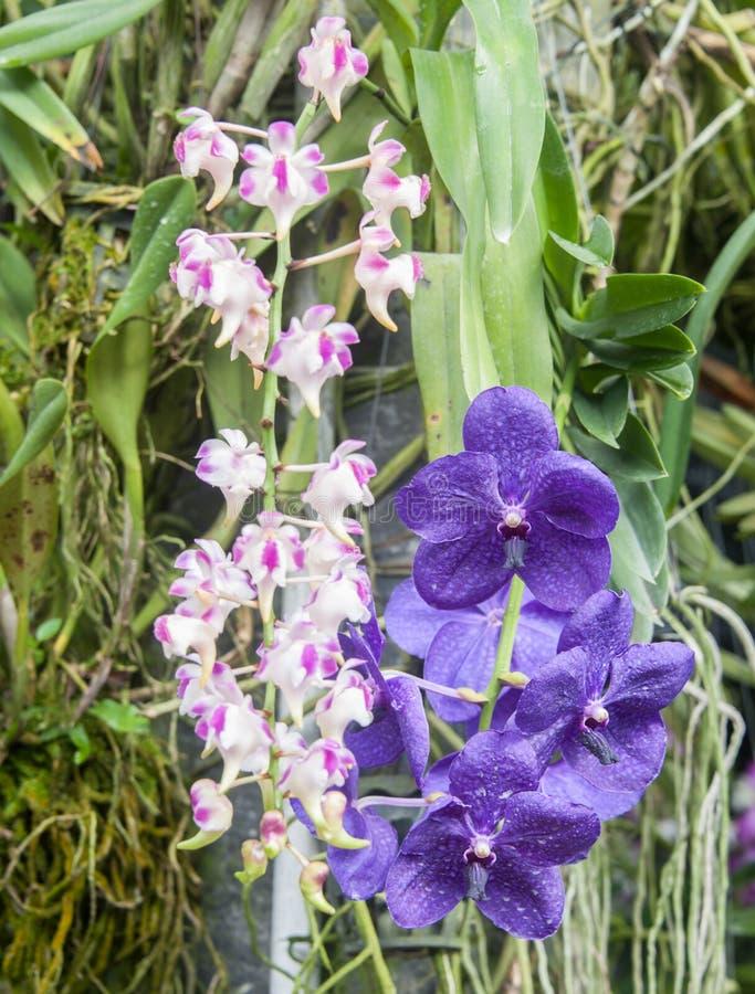 Orchidée dans le jardin image stock