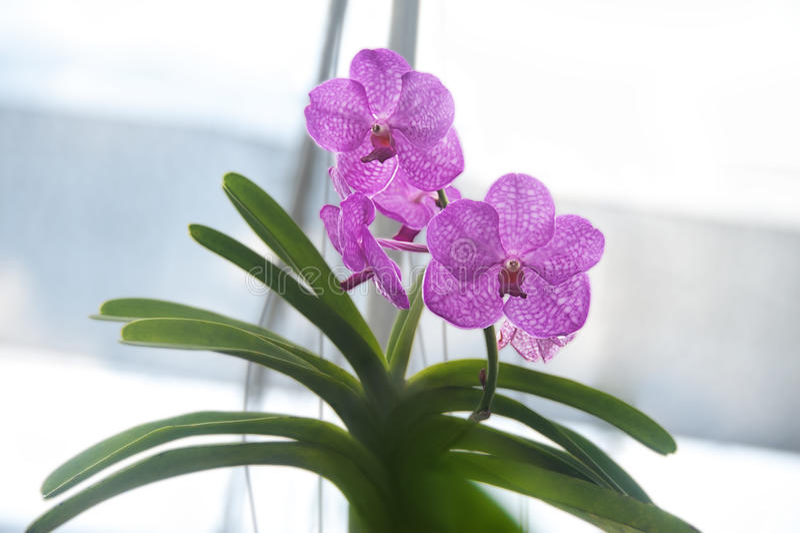 Orchidée dans le jardin photo libre de droits