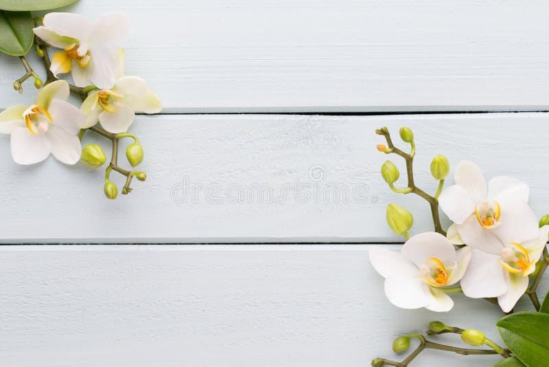 Orchidée de beauté sur un fond gris Scène de station thermale photos libres de droits