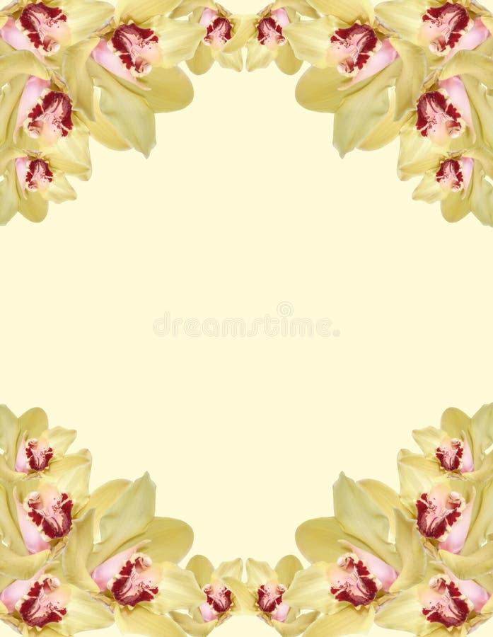 orchidée de cadre illustration stock