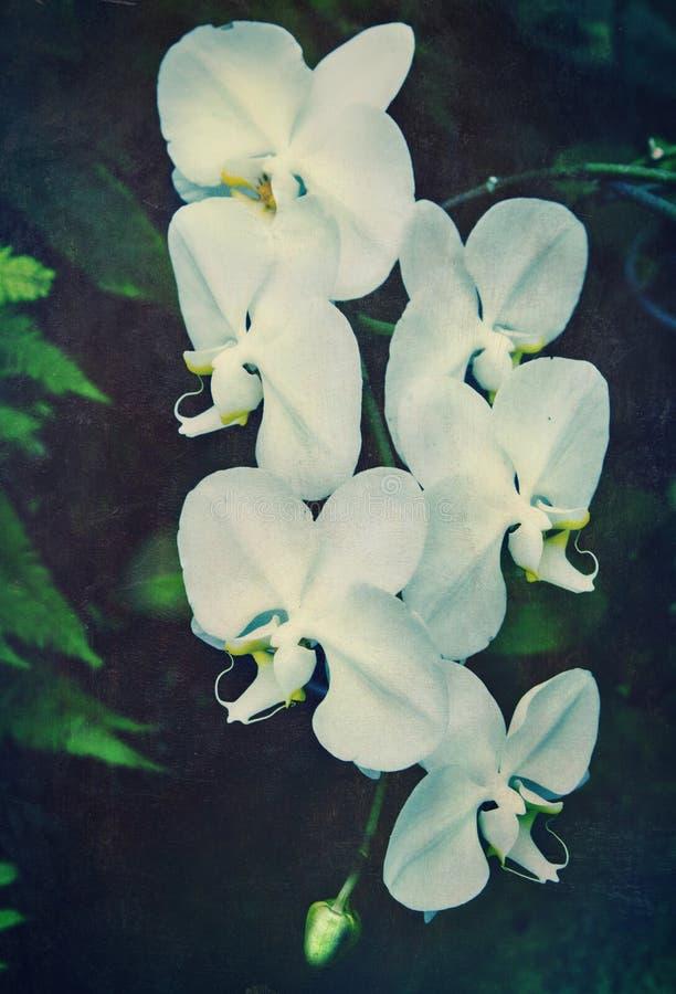 Orchidée de cru illustration de vecteur