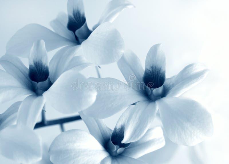 Orchidée de fleur photos libres de droits
