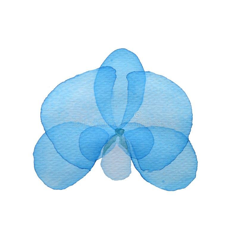 Orchidée de fleur d'aquarelle sur le fond blanc illustration libre de droits